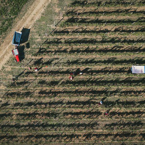 Foto-drone-aeree-4-francesco-ferrarini-studio